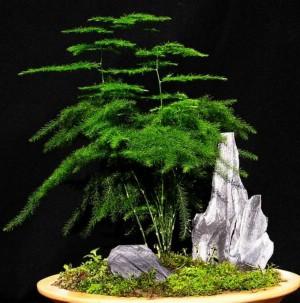 天天洁--图片库--5种观赏植物可净化室内空气--天天