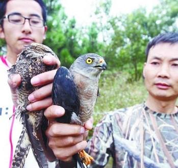 张世平是青岛市野生动物救助协会的副会长